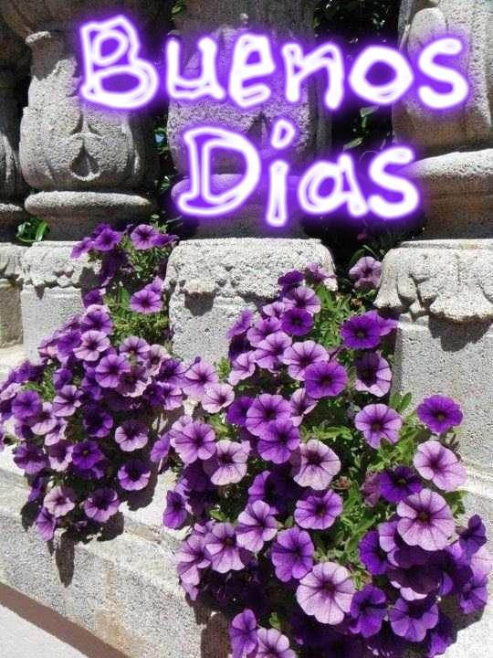 Buenos dias con flores moradas