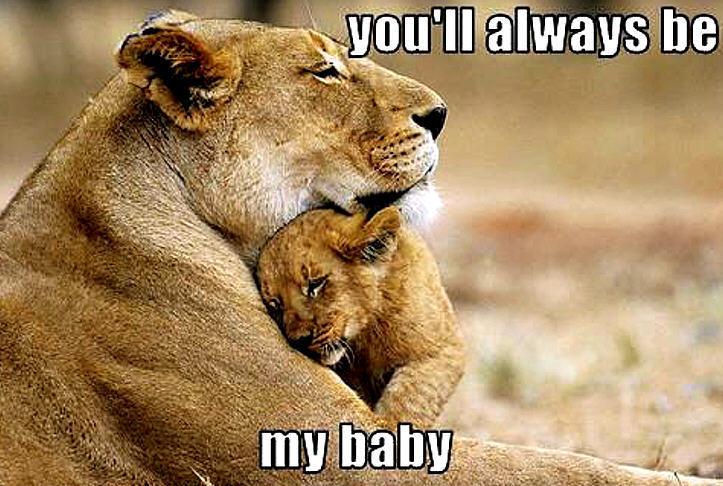 Leones abrazados