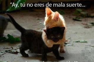 gatos amigos abrazados